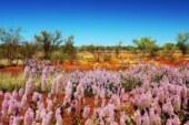 Bahar renklerine bürünen çöller