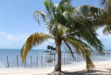 Pasifik'teki Hindistan cevizi ağaçları tehlikede
