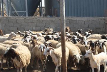 Devlet Üretme Çiftlikleri Dairesi, kasaplık hayvan satışı yapacak