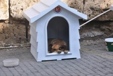 Girne Belediyesi sokak hayvanlarına karşı daha duyarlı olunmasını istedi