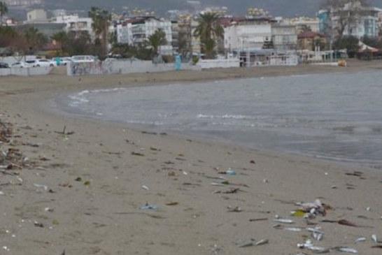 Antalya'da sahile çok sayıda ölü balık vurdu