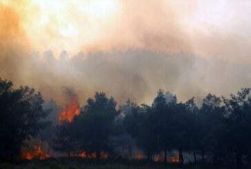 İsveç'te mevsim normallerinin üzerindeki sıcaklar yangınlara yol açtı