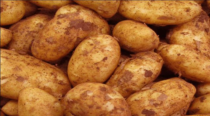 Beyan edilen patates alanları askıya alınıyor