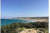 Karpaz Ronnas sahilinde, bugün sahil temizleme etkinliği düzenleniyor