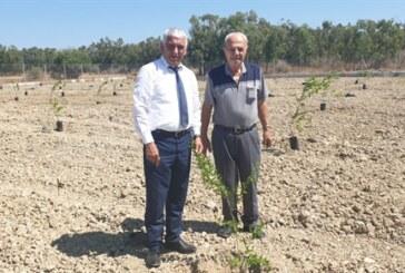 Güzelyurt'ta arıtma tesisi çevresine nar fidanları ekildi