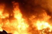 Gaziler'de okaliptüs ağaçları yandı
