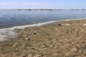 Köprülü Göleti'nde balık ölümleri ile ilgili inceleme yapıldı