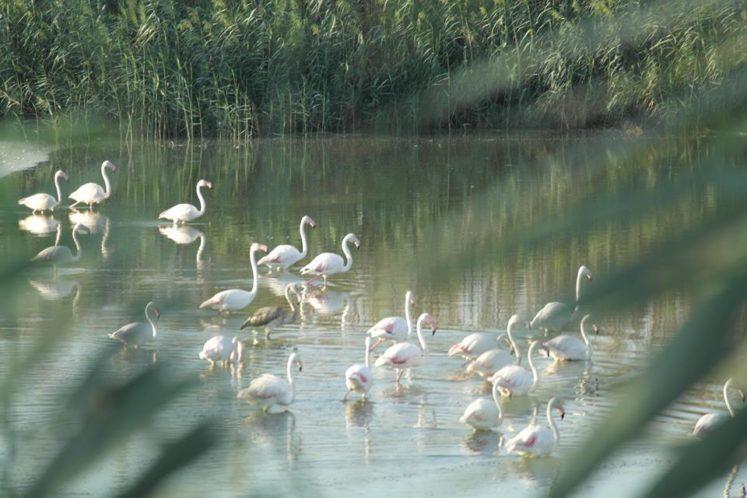 Flamingolar büyüledi