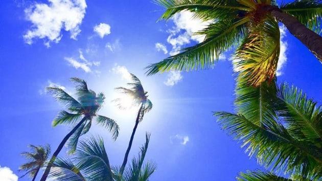 Hawaii'den mercan resiflerine zarar veren güneş kremlerine yasak