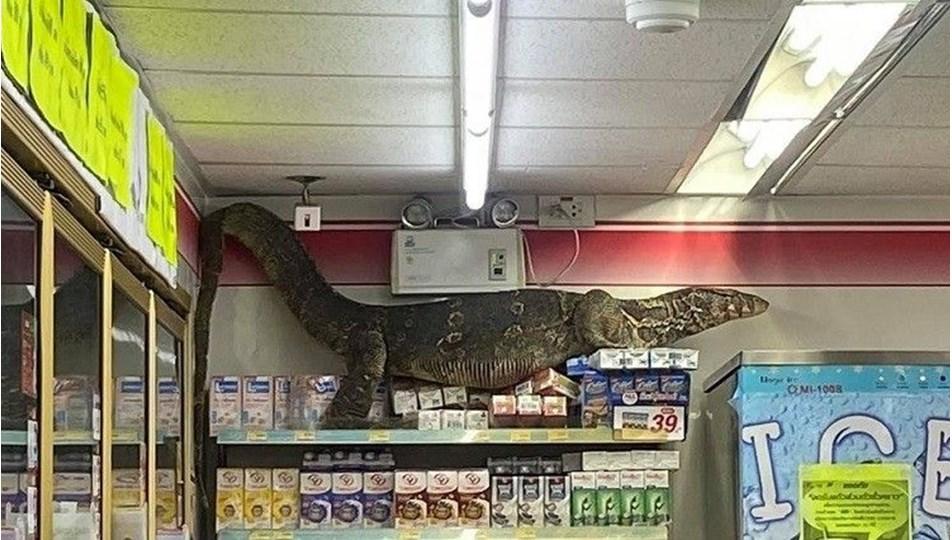 Bangkok'ta markete giren dev kertenkele korkuttu