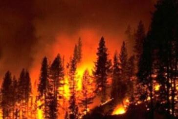 """""""Orman Yangınlarına"""" ilişkin Meclis Araştırma Komitesi raporu"""