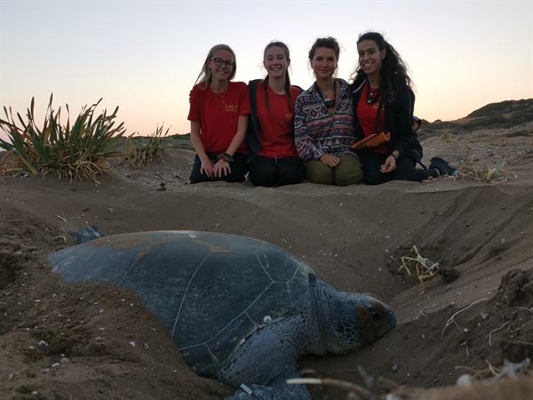Kıbrıs sahillerindeki kaplumbağaları korumak için 29 yıldır çalışıyorlar