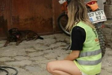 Yangında ölen çiftin köpekleri evin önünden ayrılmıyor