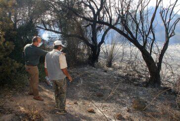 Ataoğlu, Akdeniz köyünde çıkan yangını yerinde inceledi